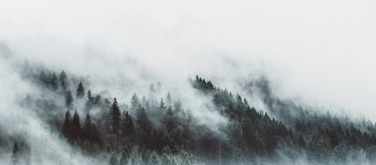 Stromy - fototapety - Obrázek č. 72