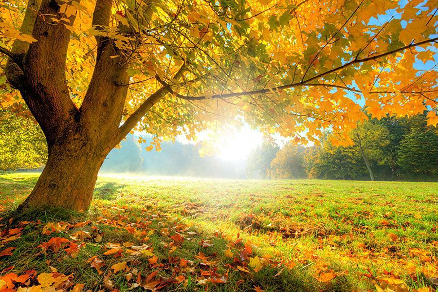 Stromy - tapety na míru - Obrázek č. 92