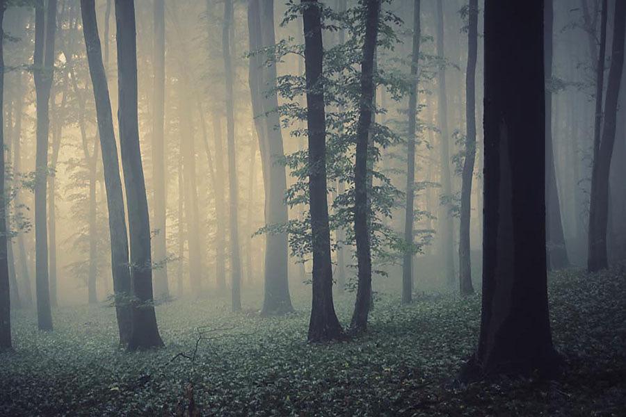 Stromy - fototapety - Obrázek č. 96