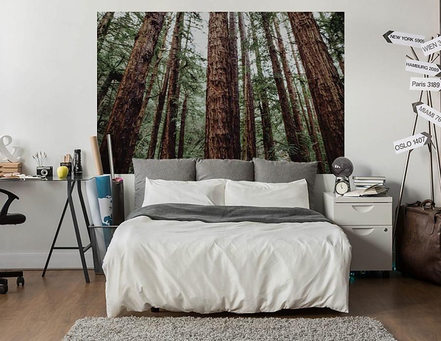 Stromy - fototapety - Obrázek č. 98