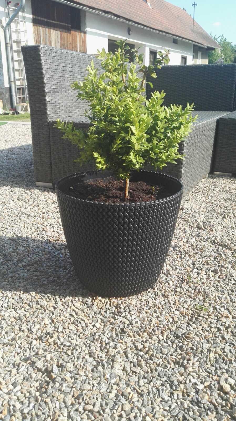 Zahrada - Obrázek č. 3