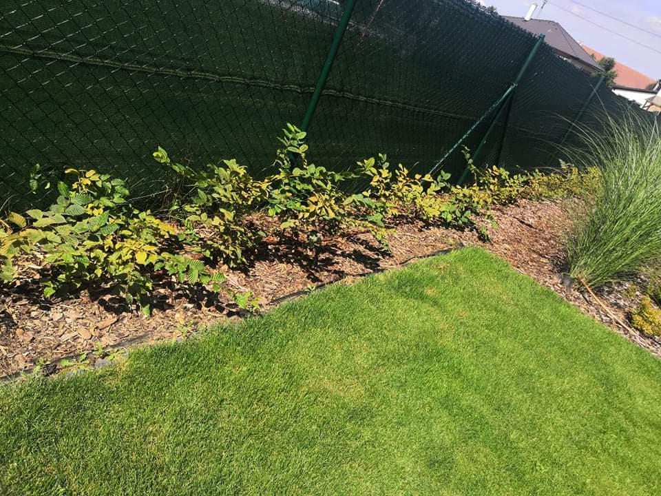 Zahrada po roce - Obrázek č. 11
