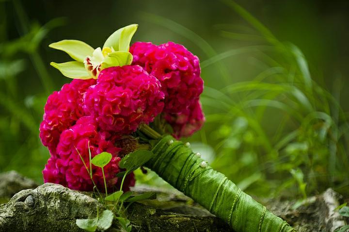 Moje predstavy :) - krásna ,...čo sú to za kvetinky ???