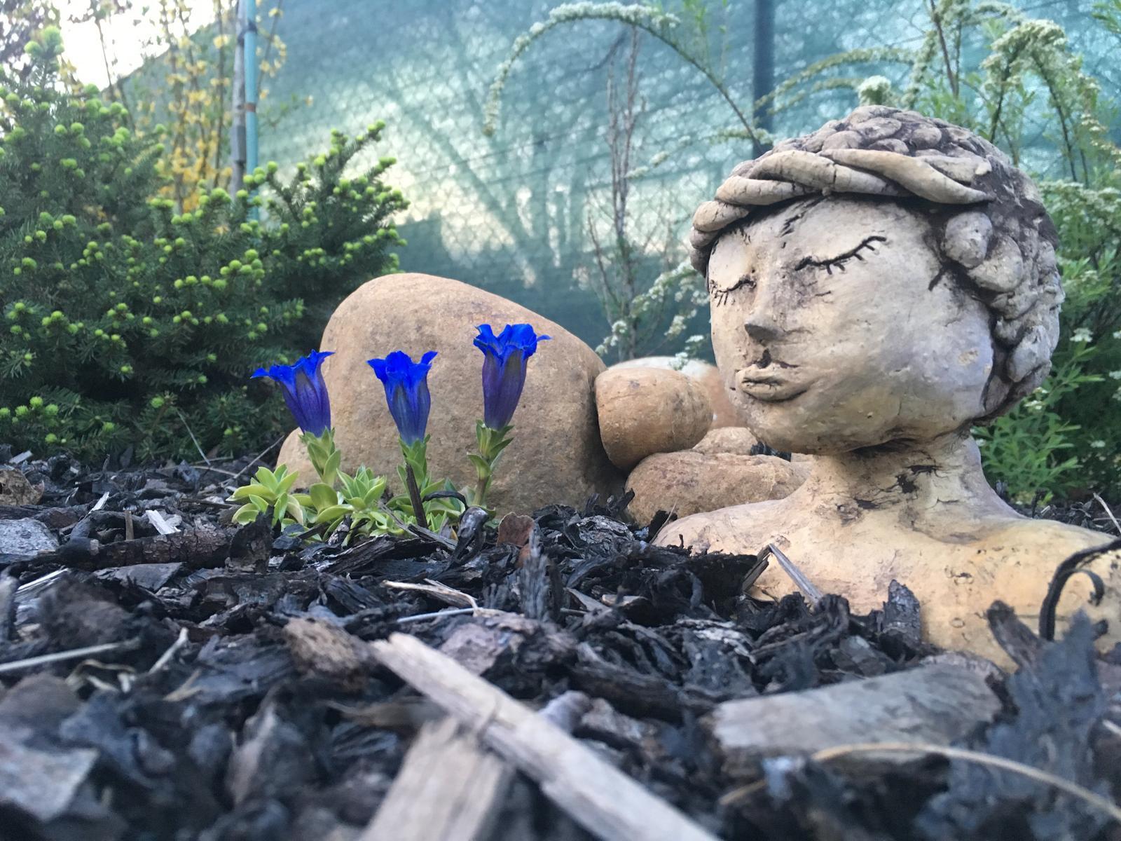 Naše zahradka s láskou ❤️ - Hořec