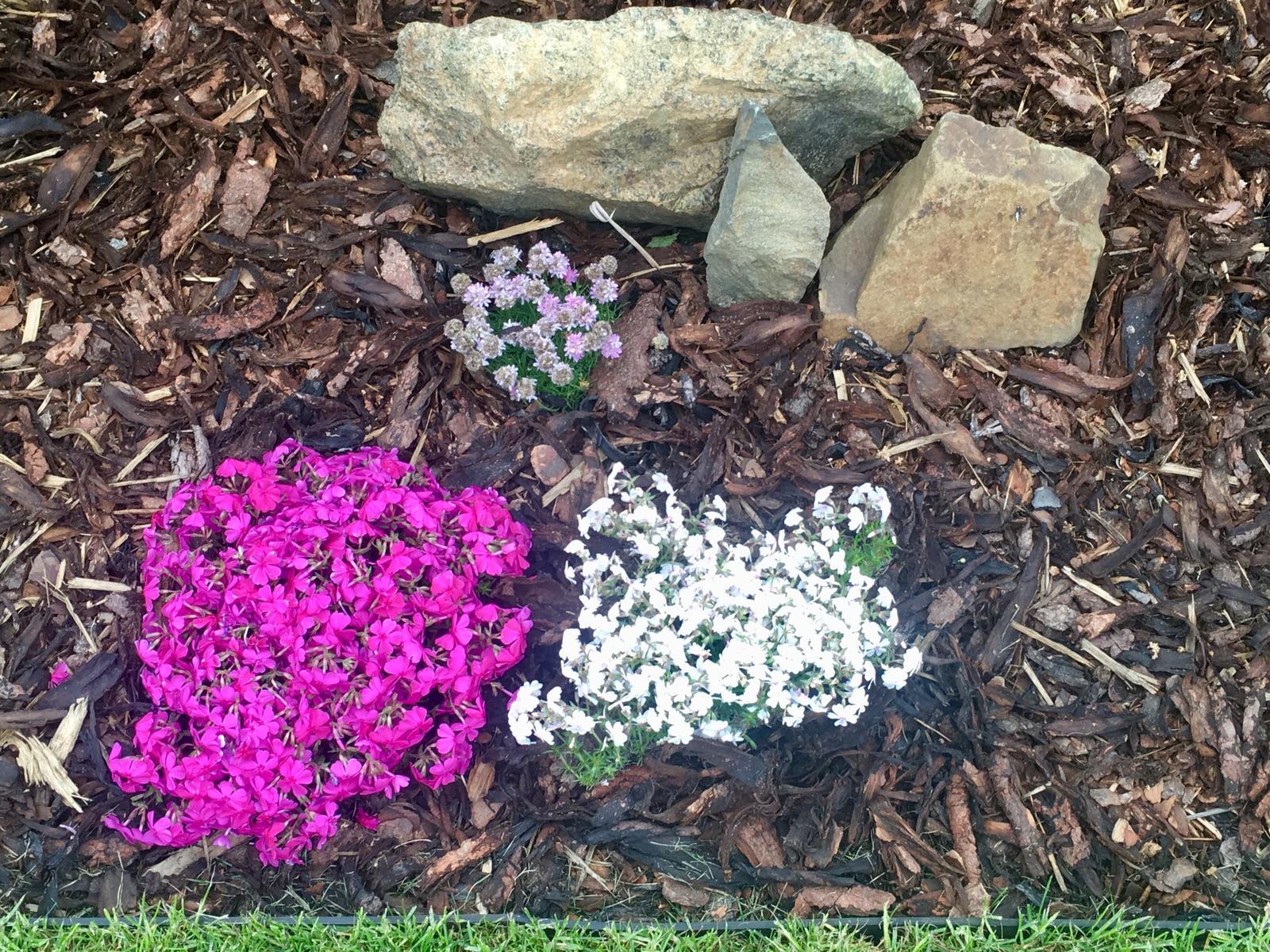 Naše zahradka s láskou ❤️ - Skalnicky