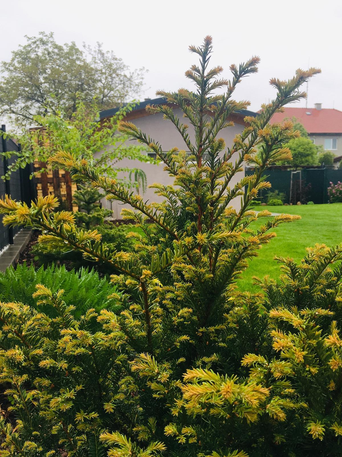 Naše zahradka s láskou ❤️ - Obrázek č. 11