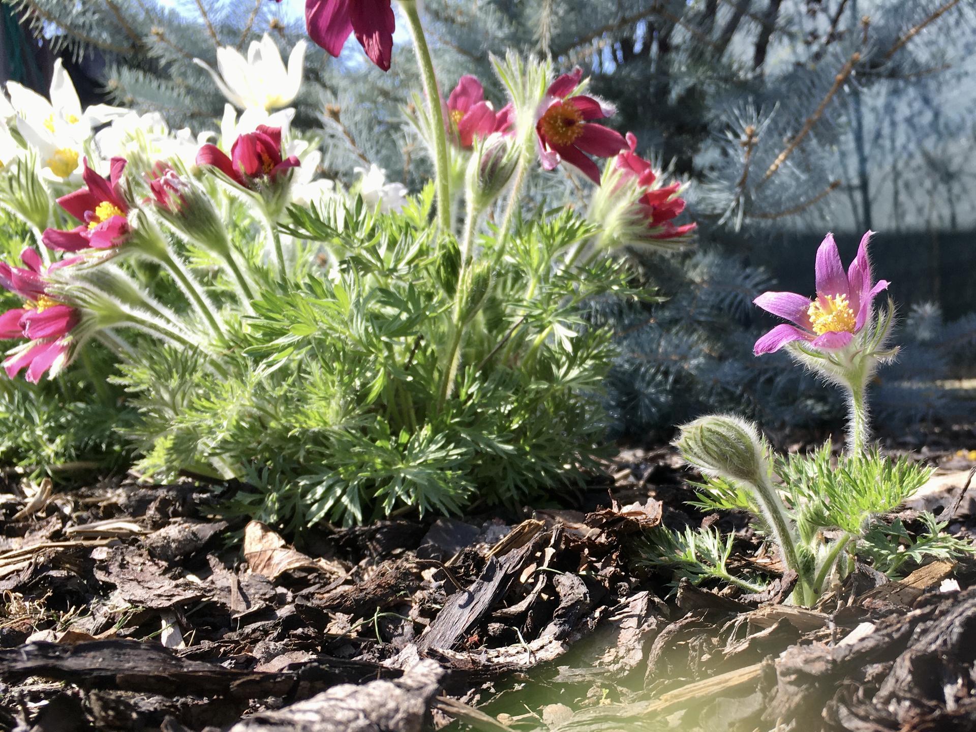 Naše zahradka s láskou ❤️ - Obrázek č. 22