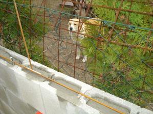 Inak naša kamarátka, ale deravý plot nechceme takže musíme skúsiť betón :)