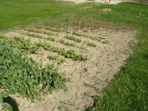 Moja prvá záhradka, ktorej sa darí, ešte príde oplotenie :)