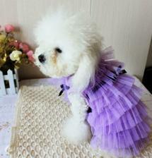 svatební pro naši psí slečnu