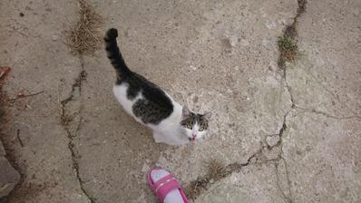 Mame ďalšiu cicu, prišla a nechce odísť :)