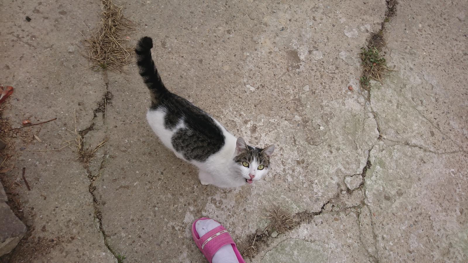 Náš domček - Mame ďalšiu cicu, prišla a nechce odísť :)