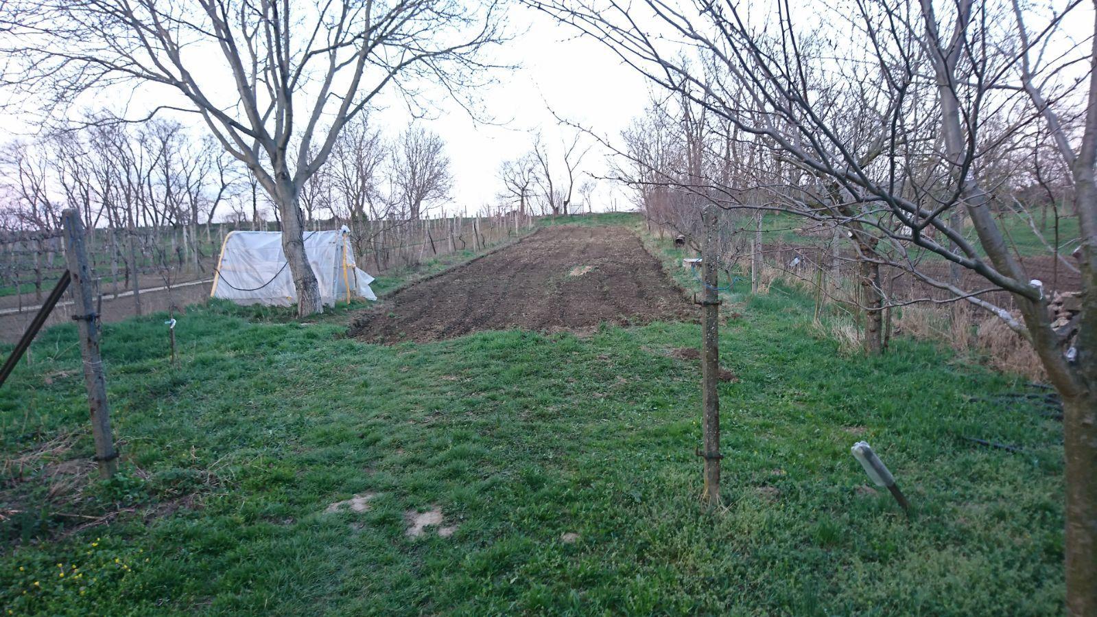 Náš domček - Konečne naša záhrada vyzerá ako záhrada, ide sa sadit:))