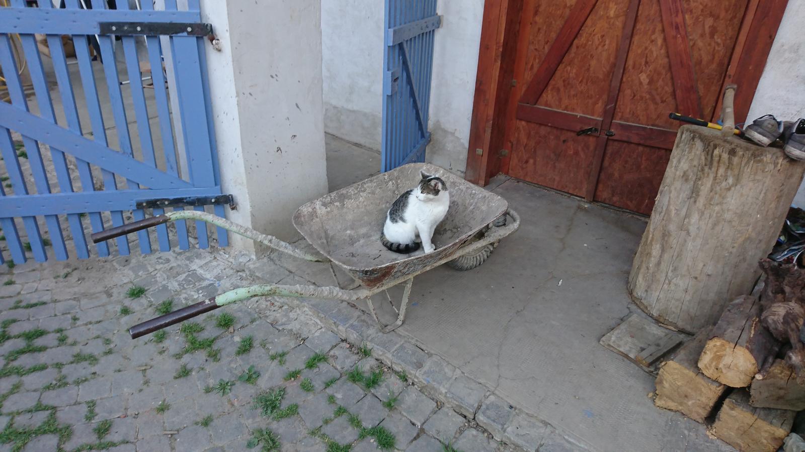 Náš domček - Chce sa voziť :)