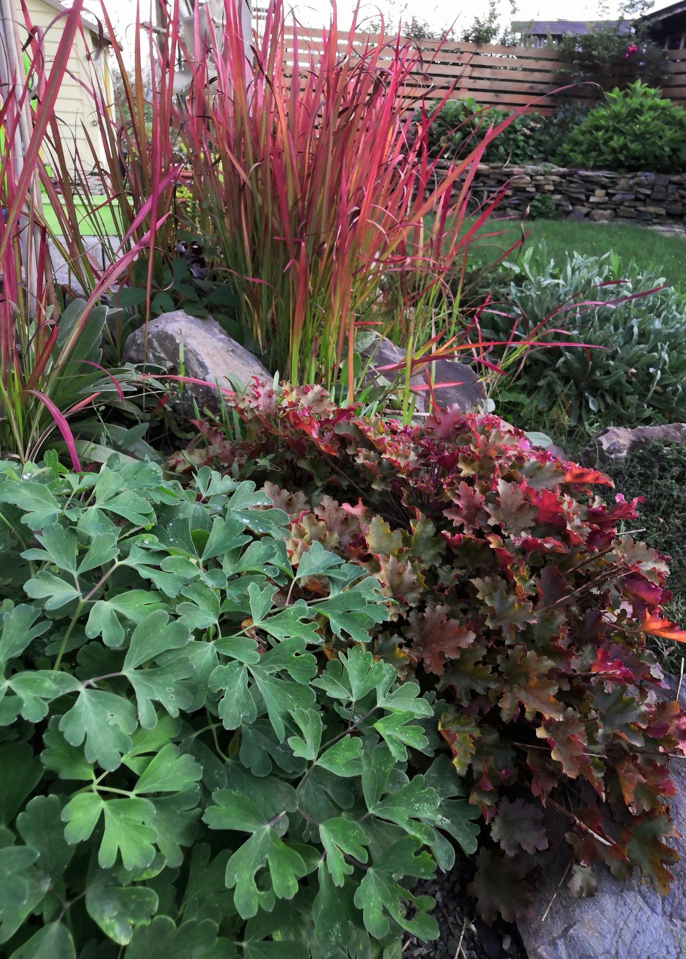záhrada 2020 - Obrázok č. 132