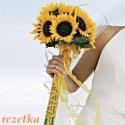 slunečnice favorit (omlouvám se za kopii fotky rezetce)