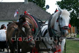Tieto koníky nás viezli do a z kostola