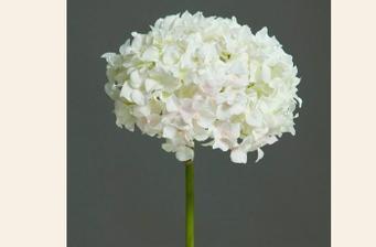 Hortenzie-základ kytice