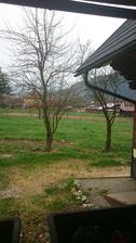 Uschnuté stromy u susedov