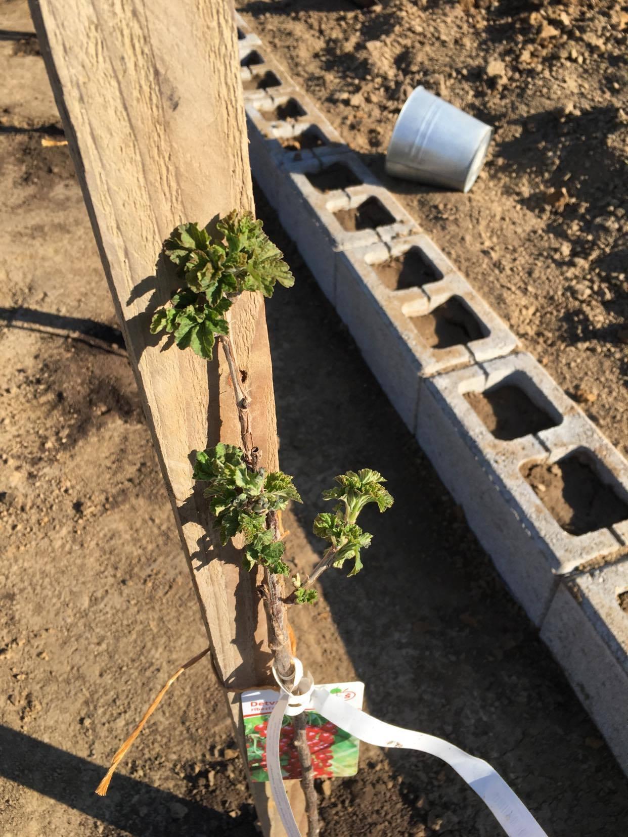 Exteriér - úžitková časť záhrady - Obrázok č. 3