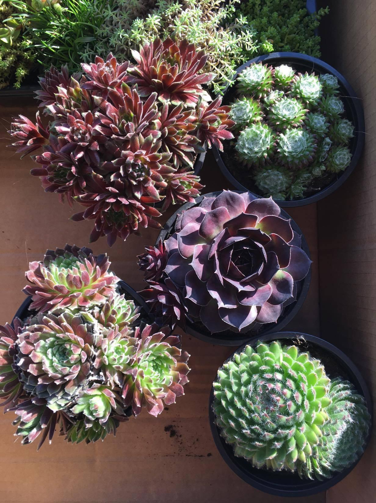 Exteriér - úžitková časť záhrady - ... do tvárnic pôjdu skalničky, musím počakť na lepšie počasie :-)