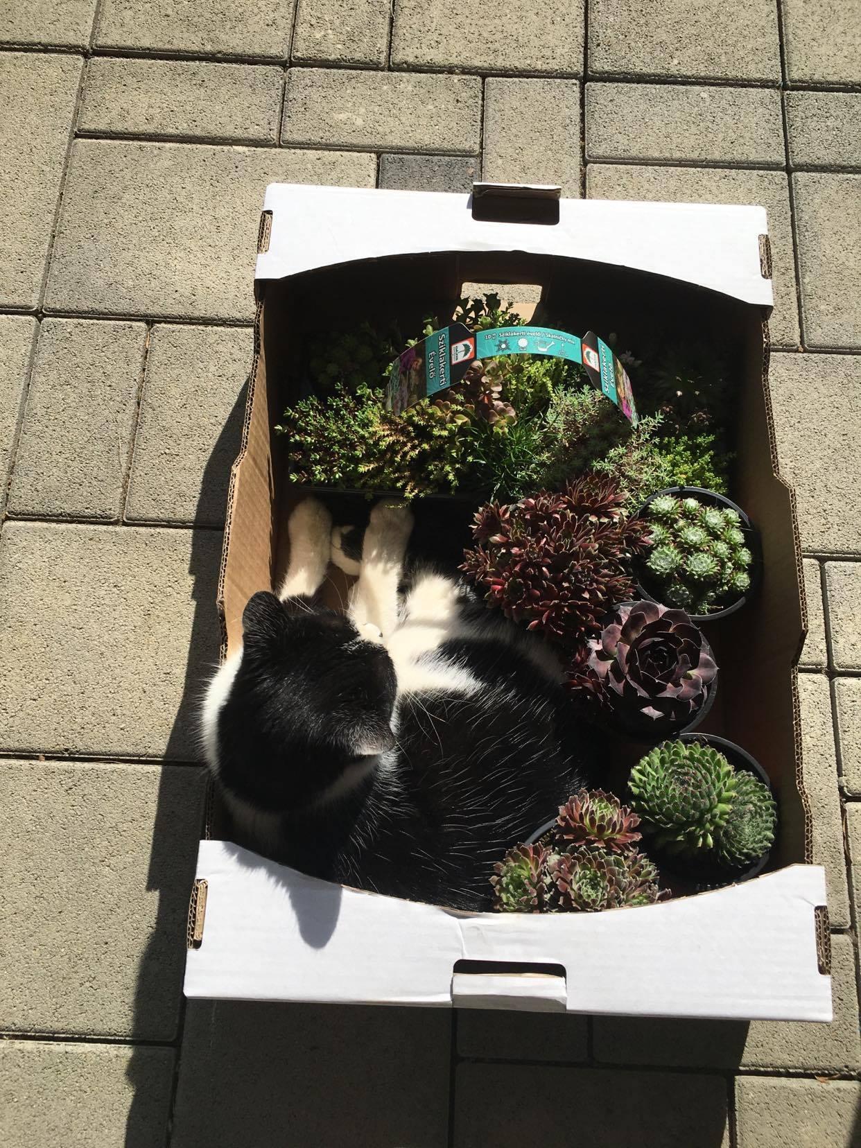 Exteriér - úžitková časť záhrady - ... kozel záhradníkom, odkedy som priniesla domov bedničku so skalkami, tak sa tam usadil náš Oliver a poctivo strážil až do večera :-D