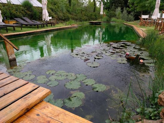 Voda v záhrade - Obrázok č. 4