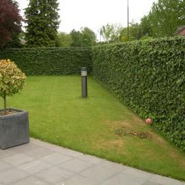 Ahojte, priala by som si celoročne zelený plot, akú rastlinu zvoliť? Brečtan? Čo odporúčate? - Obrázok č. 1