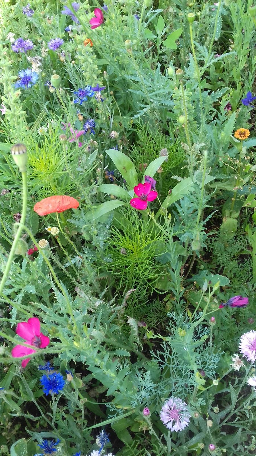 Medonosná kvetinková lúka. - Obrázok č. 1