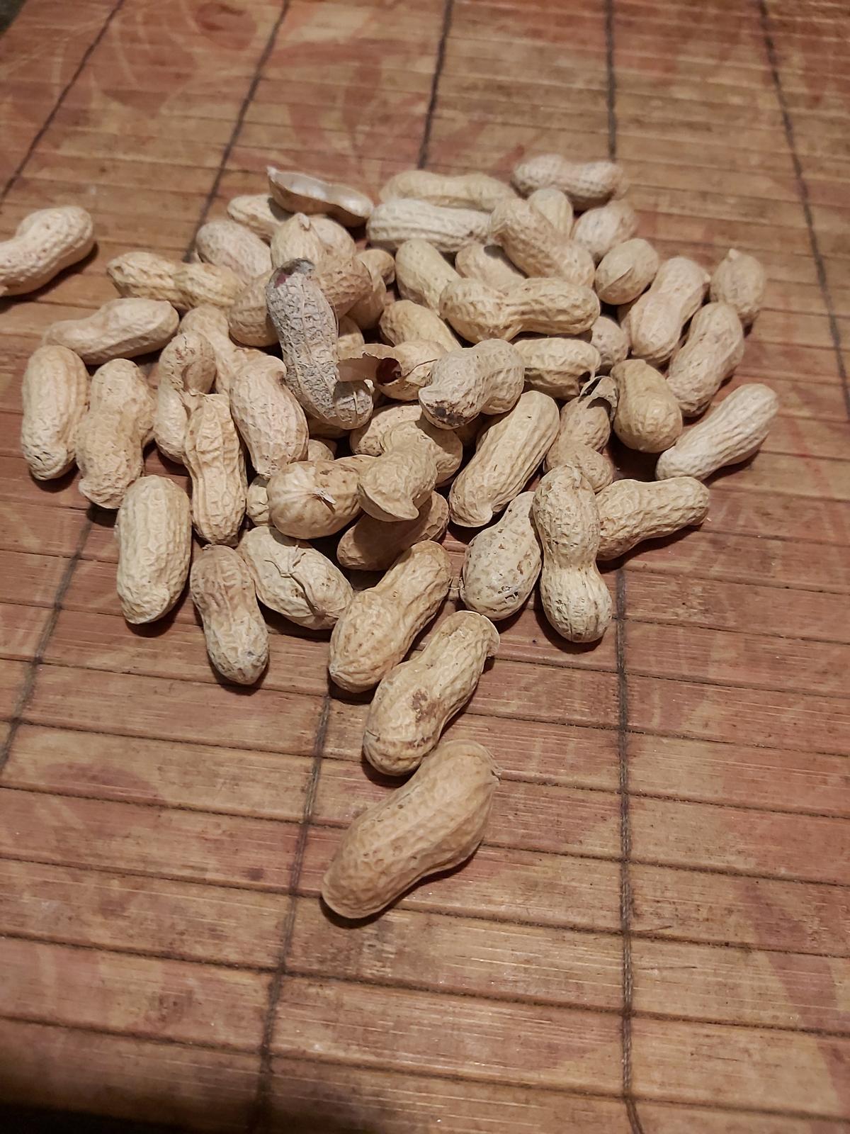 Arašidy na sadenie - Obrázok č. 1