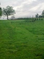 jar 2010,sadili sme tuje smaragd...nasa zahrada...predtym tu bol dzungel az po pas...