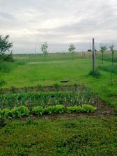 2010....mini zahradka....
