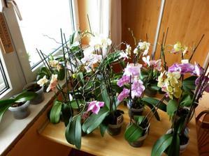 Takto to vypada,ked namacam moje orchidey