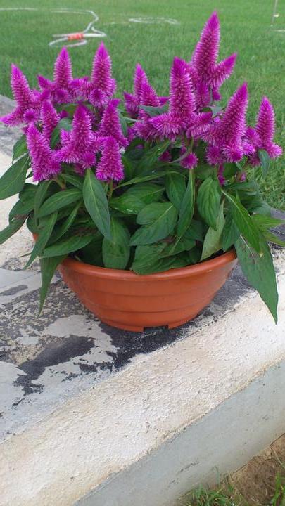 Zahrada - Dnešní úlovek - pro radost