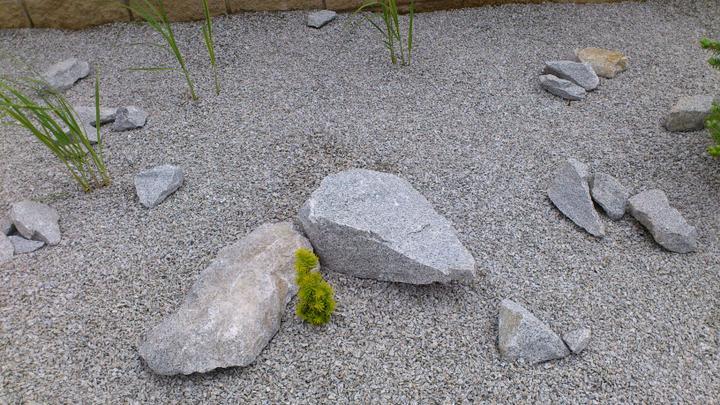 Zahrada - Mini cedr...