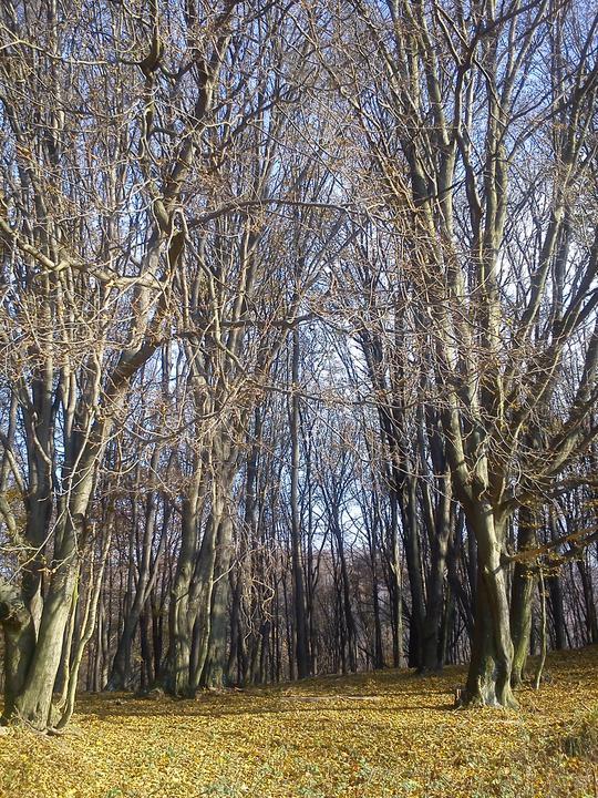 Ide sa do lesa... A do ovocného sadu - síce je to na jeseň, ale snáď aj na jar tu bude krásne