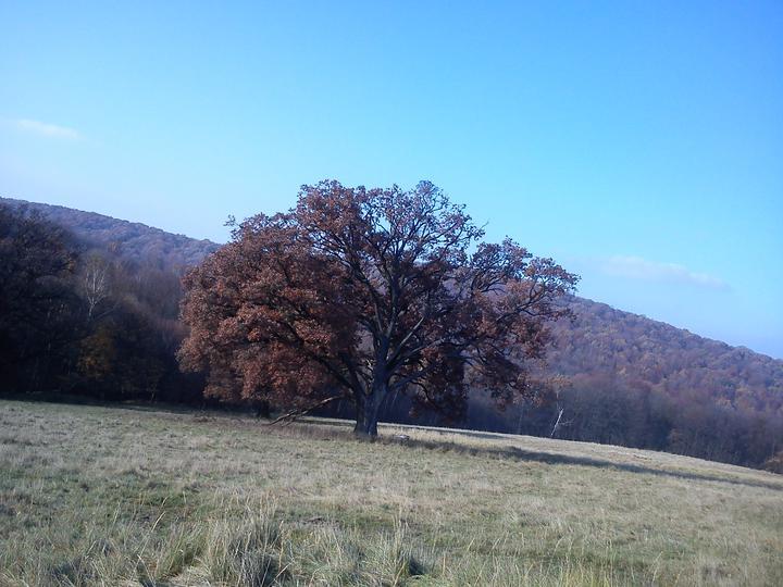 Ide sa do lesa... A do ovocného sadu - náš krásny strom