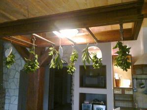 suším bylinky