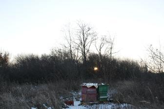 Naše včielky.