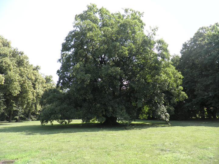 Srpnová svatba - to je náš strom :-)) tady to vypukne