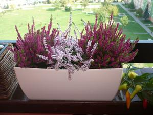 moja mini záhradka na balkóne :o)