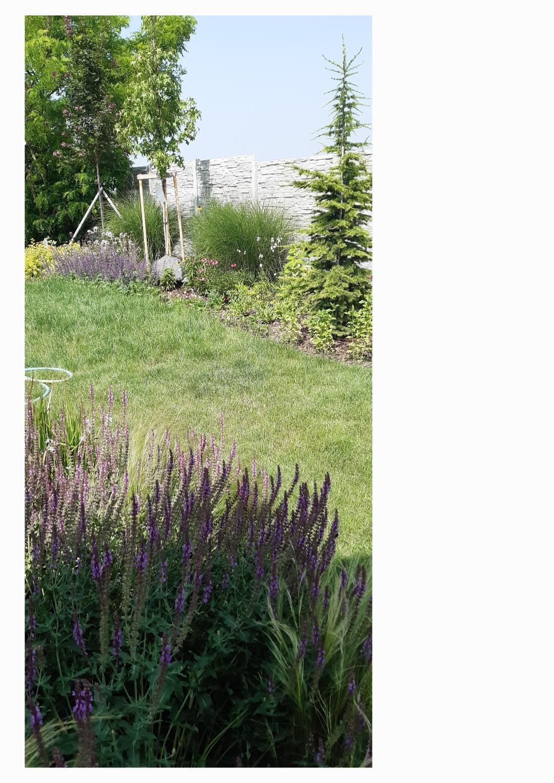 Zahrada - Este planujem na jesen posadit brectan k plotu,aby ho zakryl.