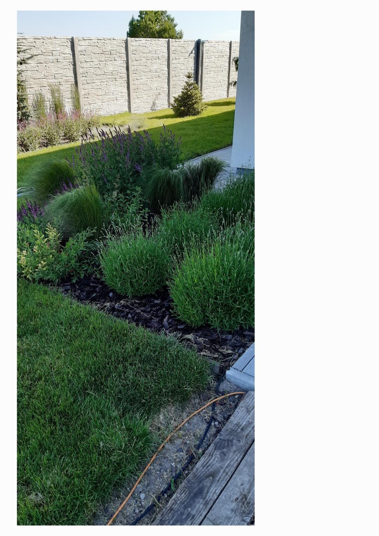 Zahrada - Este ten brectan posadit, nech sa to vsetko zelenie 😀