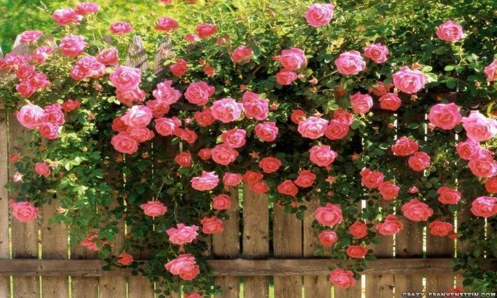 Kouzelná zahrada - Obrázek č. 68