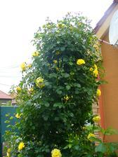 krásne kvitne a vonia