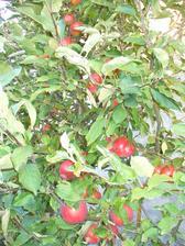naše jablká