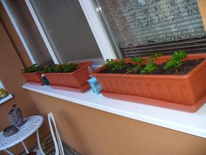 v sobotu som sadila muškáty