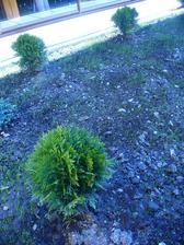 hurááá, rastie trávička
