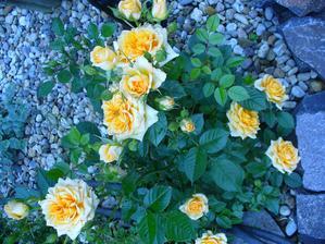 moja malá ružička