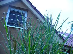 kvietky začala nahadzovať aj tráva